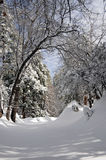 Winter landscape. Winter in the forest in the mountains Stock Photos