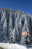 Winter Landscape. A winter landscape in Romania, with trees and snow Stock Photography
