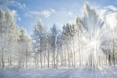 Winter landscape. Cold winter in the park Stock Photo