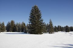 Winter landscape. With snowy trees Stock Image