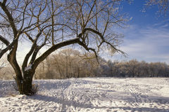 Winter landscape. Wood covered with snow in solar weather Stock Photo