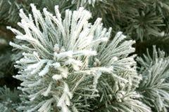 Winter landscape. Stock Images