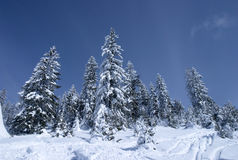 Winter landscape 8. Mountain trees covered with snow Royalty Free Stock Photography
