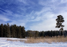 Winter landscape. Middle of Russia. Frozy,sunny day Royalty Free Stock Photography