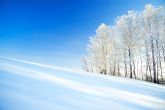 Free Winter Landscape A With The Blue Sky, A Field And The Forest Stock Photography - 49122082