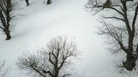 Winter landscape aerial view. Winter road in winter forest landscape with barns aerial footage stock footage