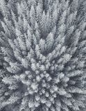 Winter landscape from air. Forest as a background at the winter time royalty free stock image