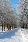 Winter landscape, alley Royalty Free Stock Photos