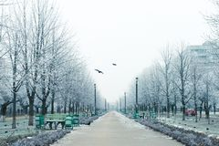 Winter landscape in the alley of city park. Winter landscape. Outside the city is covered with snow. Fairy Winter. snowy city. city streets early in the morning Royalty Free Stock Photography