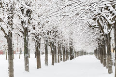 Winter landscape. Alley covered with snow after snowfall. Royalty Free Stock Photos