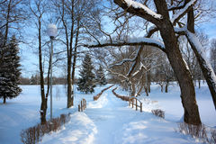 Winter Landscape with Alley in Snowy Park Royalty Free Stock Images