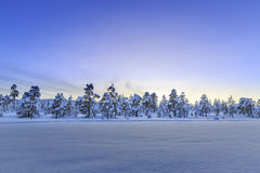 Winter landscape in Anderdalen Nationalpark Royalty Free Stock Images
