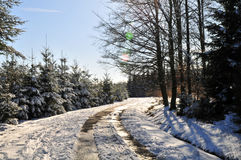 Winter landscape in Ardennes Royalty Free Stock Photography