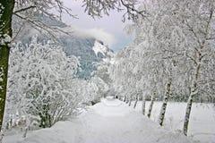 Winter landscape from Austria Stock Image