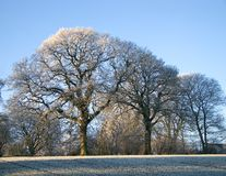 Winter landscape - background Stock Image
