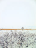 Winter landscape (background) Royalty Free Stock Images