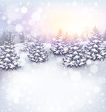 Winter Landscape Background with Christmas Trees and Sun Light. Winter Landscape Background with Christmas Trees in Snow and Sun Light Stock Image