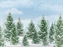 Winter fir tree forest. Winter landscape. The background of the forest with the trees against the sky with snow Stock Photos