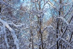 Winter landscape, background of snow-covered trees in the forest. Winter landscape. background of snow-covered trees in the forest royalty free stock photos