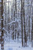 Winter landscape, background of snow-covered trees in the forest. Winter landscape. background of snow-covered trees in the forest royalty free stock photo
