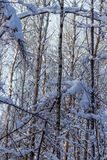 Winter landscape, background of snow-covered trees in the forest. Winter landscape. background of snow-covered trees in the forest stock photos