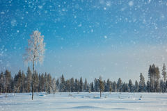Winter landscape background with snow and icy tree Royalty Free Stock Photography