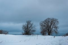 Winter landscape with bald trees in the snow field. Winter landscape with bald trees in the snowy field stock photos