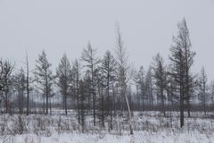 Winter landscape with bare trees and a road / Gloomy winter day / Stock Photo