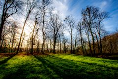 Winter landscape of bare trees at sunset stock photos