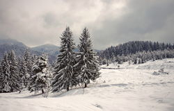 Snow. Winter landscape on the mountain Stock Photos