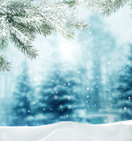 Winter landscape. Beautiful winter background with branch spruce Stock Photo