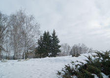 Winter landscape. Beautiful winter landscape with birches and fir trees on the background of cloudy sky Stock Photos