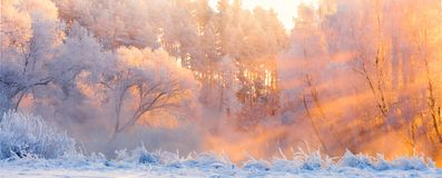 Winter landscape. Beautiful Christmas morning outdoors. Winter forest with bright sunshine and sunbeams. Panorama of frosty winter