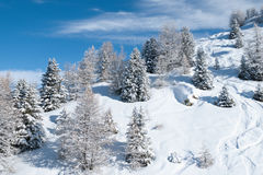 Winter landscape. Beautiful winter landscape with fir trees Royalty Free Stock Photos