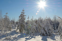 Winter landscape. Beautiful winter landscape in the forest, Russia Royalty Free Stock Photos