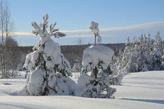 Winter landscape. Beautiful winter landscape in the forest, Russia Stock Images
