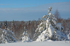 Winter landscape. Beautiful winter landscape in the forest, Russia Stock Photos