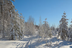 Winter landscape. Beautiful winter landscape in the forest, Russia Stock Photography