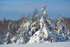 Winter landscape. Beautiful winter landscape in the forest, Russia Royalty Free Stock Photo