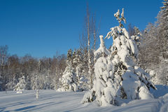 Winter landscape. Beautiful winter landscape in the forest, Russia Stock Image