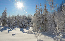 Winter landscape. Beautiful winter landscape in the forest, Russia Royalty Free Stock Photography
