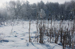 Winter landscape with beautiful frozen trees Stock Photos