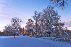 Winter landscape of beautiful park Stock Images
