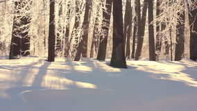 Winter landscape. Beautiful snow covered park in winter. Sunlight on white snow stock video