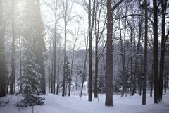 Winter landscape, beautiful snowy scene in the forest stock photos