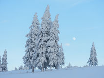 Winter landscape with the beautiful snowy trees Stock Image