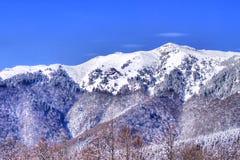 Blue sky, snowy mountain, fir trees forest stock photo