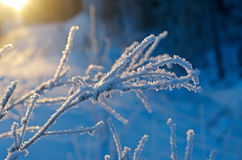 Winter landscape. Royalty Free Stock Photos