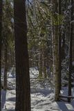 Winter landscape behind tree trunks royalty free stock image