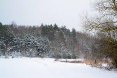 Winter landscape in Belarus with frosty forest and snowy field. Landscape in Belarus with frosty forest and snowy field stock photography